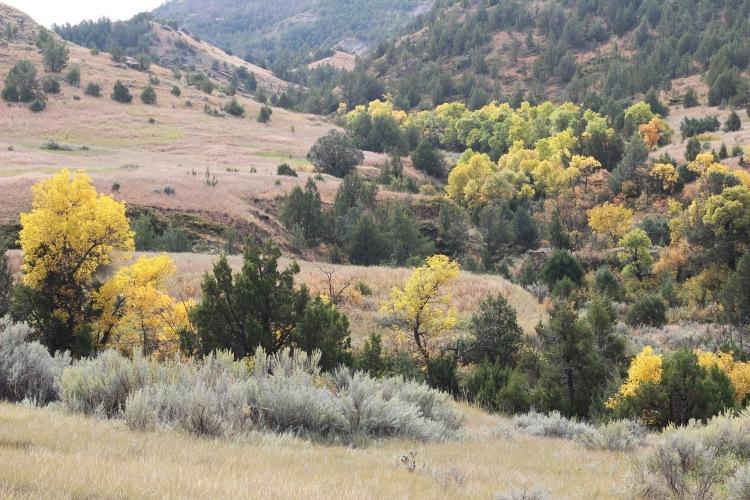 Lower Paddock Creek Trail